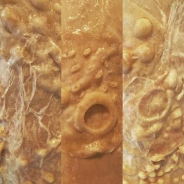 Octopus textures work in progress 2019